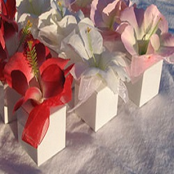 Hibiscus Favor Boxes